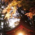 Photos: 手水のお社@鹿島神宮2