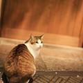 Photos: いらっしゃいまし~♪