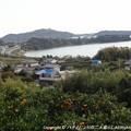 Photos: 2012-11-24ミカン狩り (5)