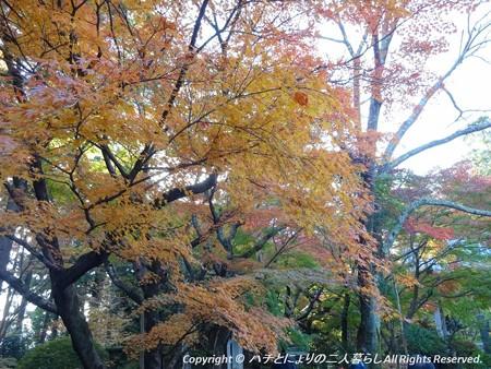 2012-11-24ミカン狩り (8)