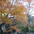 Photos: 2012-11-24ミカン狩り (8)