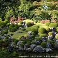 Photos: 2012-11-24ミカン狩り (12)