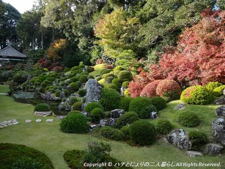 2012-11-24ミカン狩り (13)