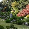 Photos: 2012-11-24ミカン狩り (13)