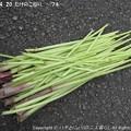 Photos: 2013-04-20たけのこ掘り (18)