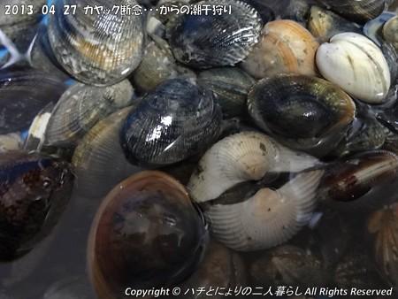 2013-04-27カヤック断念からの潮干狩り (5)