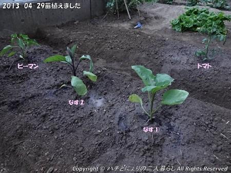 2013-04-29苗植えました (1)