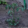 Photos: 2013-04-29苗植えました (5)
