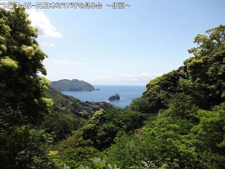 2013-05-02日本ミツバチを見る会~伊豆~ (1)