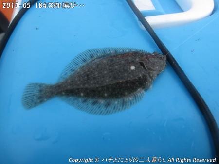 2013-05-18キス釣り再び・・・ (2)