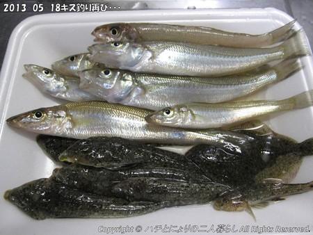 2013-05-18キス釣り再び・・・ (8)