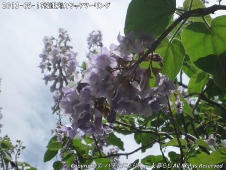 2013-05-19接阻湖カヤックツーリング (9)