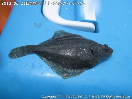 2013-06-23初青物GET!!-カヤックフィッシング- (5)