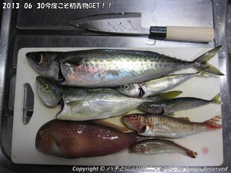 2013-06-30今度こそ初青物GET!!(10)