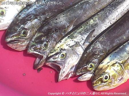 2013年8月12日意外と美味しいお魚でした♪ (10)
