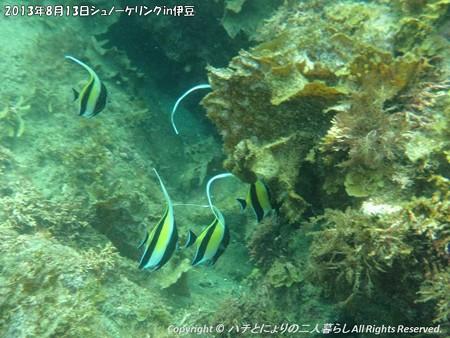 2013年8月13日シュノーケリングin伊豆 (16)