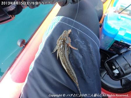 2013年8月15日エソを食らう!! (2)