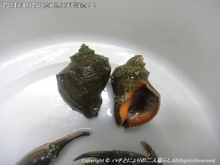 2013年8月25日忘れ物には要注意!! (4)