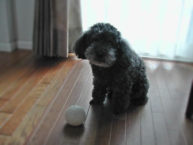 ボールを投げて~♪
