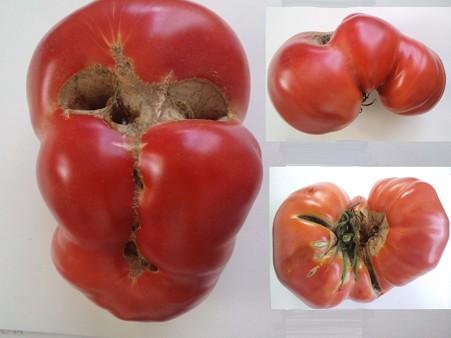 へんな形のトマト
