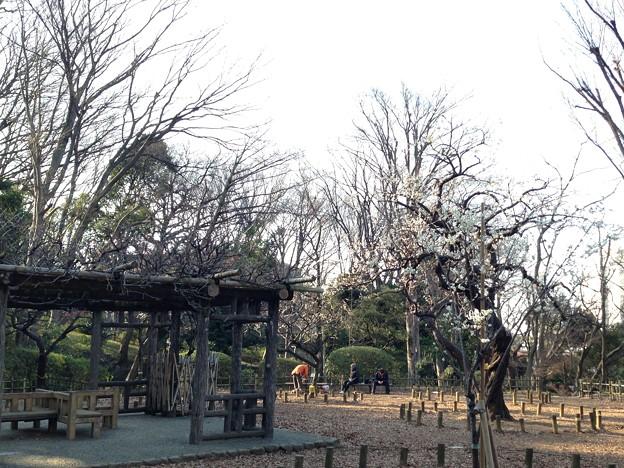 13.02.26.有栖川宮記念公園(港区南麻布)
