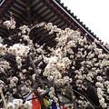 Photos: 13.03.04.西新井大師15