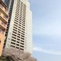 Photos: 13.03.23.明石町河岸公園1