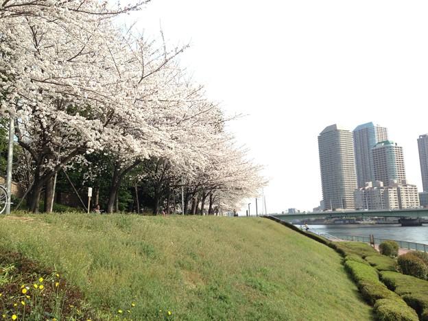 13.03.23.明石町河岸公園3