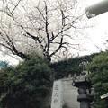 Photos: 芝大神宮(港区芝大門)