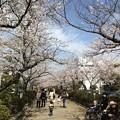13.03.28.鶴岡八幡宮(段葛)