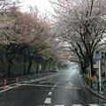 Photos: 13.04.02.哲学堂公園外・西