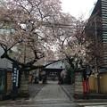 Photos: 13.04.02.新井薬師(中野区)