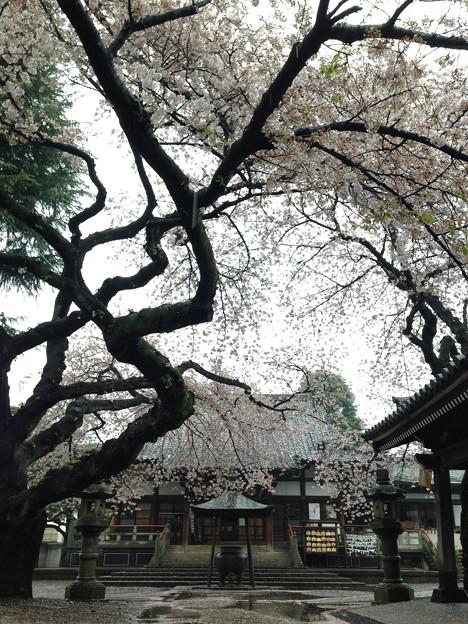 新井薬師(中野区)4