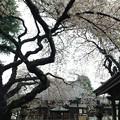 Photos: 新井薬師(中野区)4