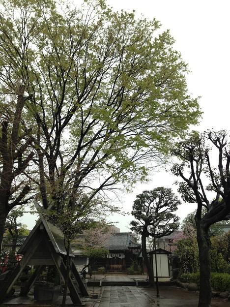 北野神社(新井天神)5
