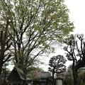 Photos: 北野神社(新井天神)5