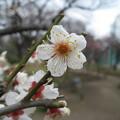 Photos: 14.02.23.台東区立隅田公園 梅めぐり散歩道