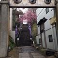 Photos: 北野神社(牛天神。文京区春日)