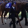 オルフェーヴル(5回中山8日 10R 第58回グランプリ 有馬記念(GI)出走馬)