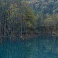 写真: 晩秋の青い池