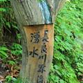 長良川源流湧水 その1