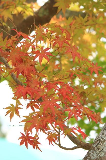Photos: 牧歌の里の紅葉