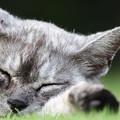 Photos: 寝る・・・野良猫。