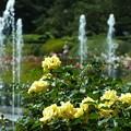 ~秘密の花園~