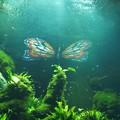 ~水槽の中の光る蝶~