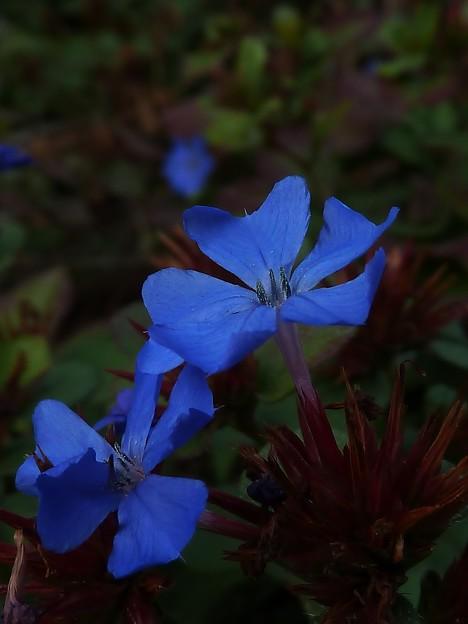 写真: ~教会の花畑にて~