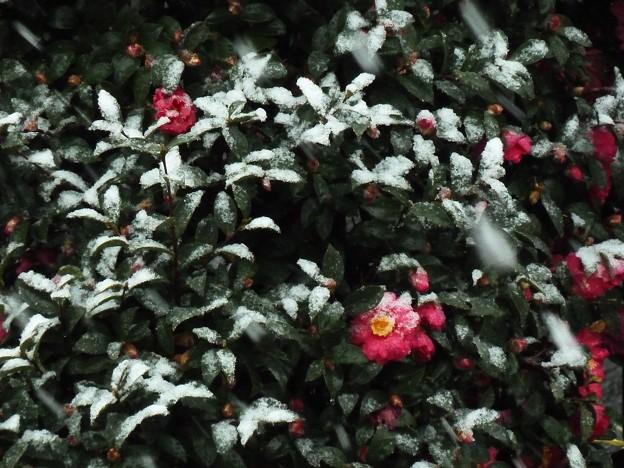 Photos: ~雪の日に~