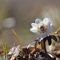 Photos: ~春よ、恋♪~