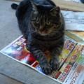 Photos: ~今日は「猫の日」~