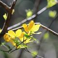写真: ~春LaLaLa~